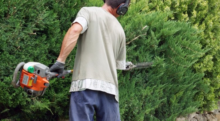 Hedge-Cutting Gardening Services Cork